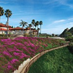 The purple iceplant blooms in the cooler months